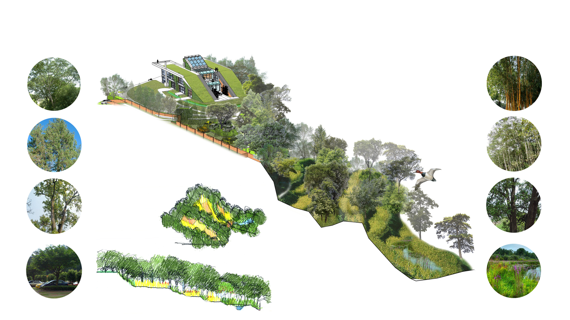 Green roof house design MAP Architecture Architect Kiran Mathema